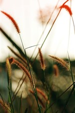 Preview iPhone wallpaper Grass close-up, hazy, nature scenery