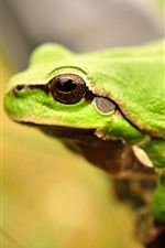 Preview iPhone wallpaper Green frog, eye, hazy