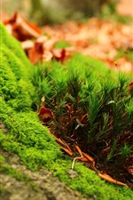 Preview iPhone wallpaper Green grass, ground, plant macro photography