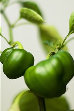 Preview iPhone wallpaper Green plants, peppers