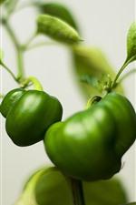 Plantas verdes, pimentas