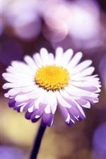 iPhone壁紙のプレビュー 淡いピンクのデイジーのクローズアップ、花びら、光の輪