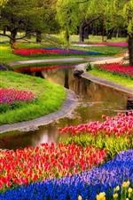 Preview iPhone wallpaper Many tulips, river, park, trees, spring