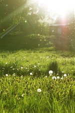 Preview iPhone wallpaper Meadow, white flowers, trees, green, sun rays, glare