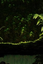 Preview iPhone wallpaper Nature scenery, ferns, green, grass, water