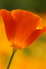 Preview iPhone wallpaper One orange poppy flower close-up