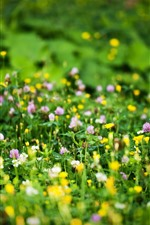 Preview iPhone wallpaper Pink and yellow wildflowers, green grass