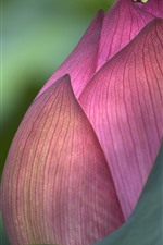 Preview iPhone wallpaper Pink lotus bud macro photography