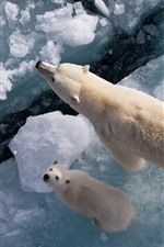 Preview iPhone wallpaper Polar bears, ice, sea, top view