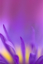 Preview iPhone wallpaper Purple flower petals macro photography, hazy