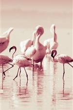 Preview iPhone wallpaper Some flamingo, pink feather birds