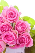 Some pink roses, green leaves, white background