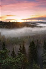 Preview iPhone wallpaper Sunrise, forest, trees, morning, fog