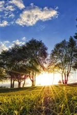 Trees, grass, meadow, sunlight, glare