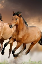 Preview iPhone wallpaper Two brown horses running, speed