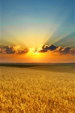 Preview iPhone wallpaper Wheat fields, sunset, clouds