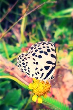 Preview iPhone wallpaper White butterfly, yellow flowers, insect