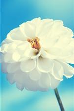 iPhone壁紙のプレビュー 白い花、ダリア、青い空