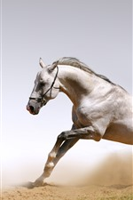 Preview iPhone wallpaper White horse, freedom, running