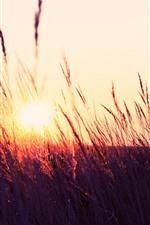 Winter, snow, road, reeds, sunrise