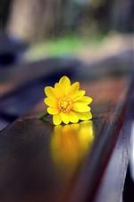 iPhone壁紙のプレビュー 黄色い花、ベンチ、かすんでいる