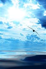 Blue sky, clouds, sun rays, bird flight