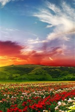 Colorful flowers, flower field, mountain, sunset, clouds