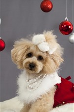Preview iPhone wallpaper Cute dog and Christmas balls