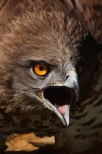 Preview iPhone wallpaper Eagle, beak, angry