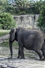 Vorschau des iPhone Hintergrundbilder Elefantenspaziergang, Bäume
