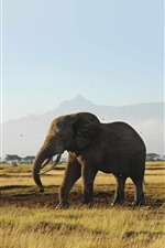 Preview iPhone wallpaper Elephants, grassland, trees, mountain