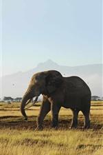 Elephants, grassland, trees, mountain