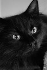 Gato preto fofo, olhos, olhar
