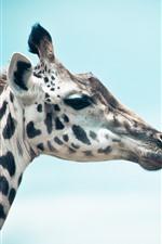 Preview iPhone wallpaper Giraffe, head, blue sky background