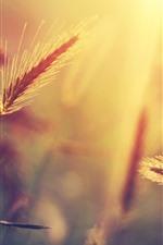 Vorschau des iPhone Hintergrundbilder Gras, warmes Licht, Morgen