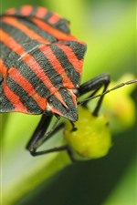 Preview iPhone wallpaper Insect macro photography, plants
