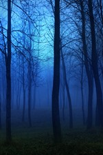 Preview iPhone wallpaper Night, forest, trees, fog