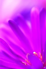 Purple petals close-up, flower macro photography