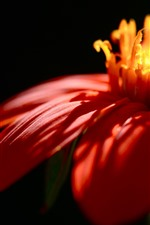 Red flower petals close-up, sunlight