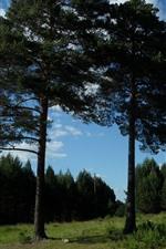 Einige Bäume, blauer Himmel, Sommer
