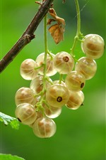 Preview iPhone wallpaper Some yellow currants, green background