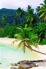 Preview iPhone wallpaper Tropical, beach, palm trees, sea, resort