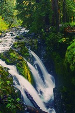 Preview iPhone wallpaper Waterfall, trees, green, forest