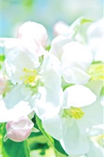 Preview iPhone wallpaper White apple flowers, petals, bright, spring