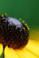 Yellow flower close-up, petals, pistil