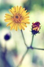 Close de florzinhas amarelas, pétalas, caule