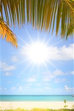 Preview iPhone wallpaper Beach, palm trees, sunshine, boat, sea