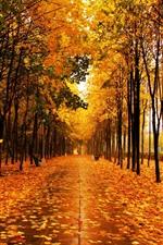 iPhone壁紙のプレビュー 秋の美しい公園、黄色のカエデの葉、木々、濡れた道