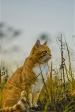 Preview iPhone wallpaper Cat sit on ground, grass, nature
