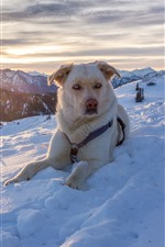 Dog in winter, snow, mountains, sunset